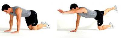 preview-full-bird-dog-exercise-basic-1